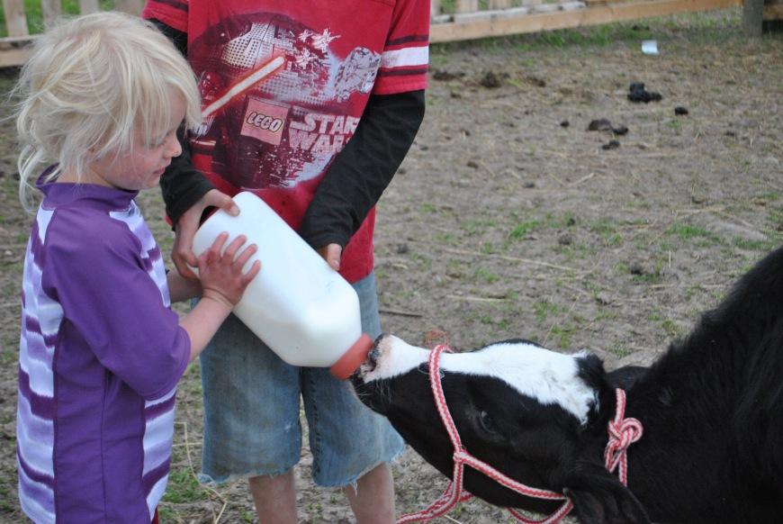 ana feeding cow color