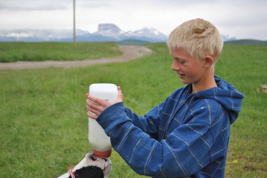 e color feeding cow