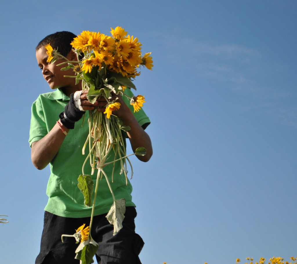 eno sunflower