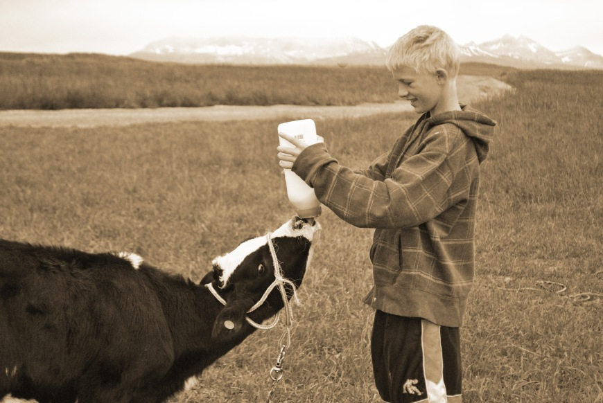 Et feeding baby cow