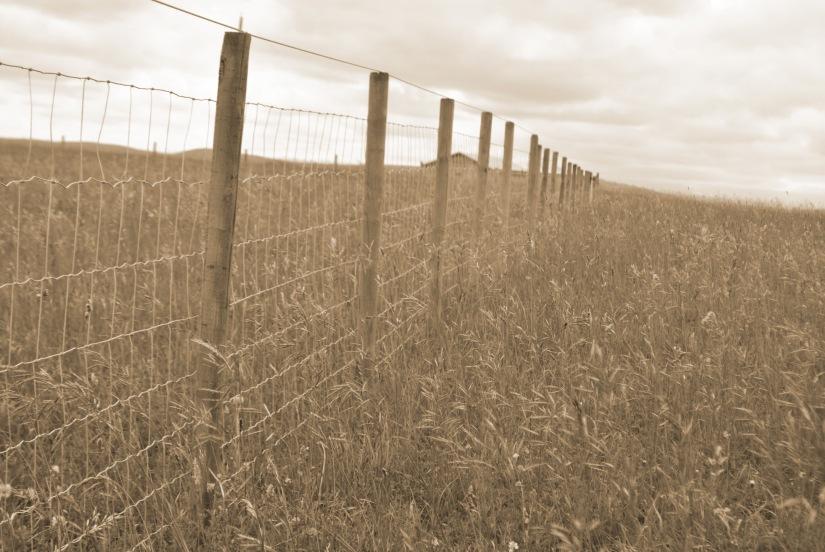fences 1