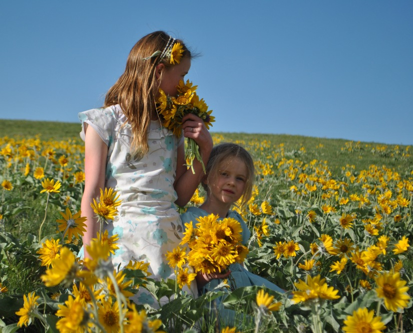 sisters sunflowers