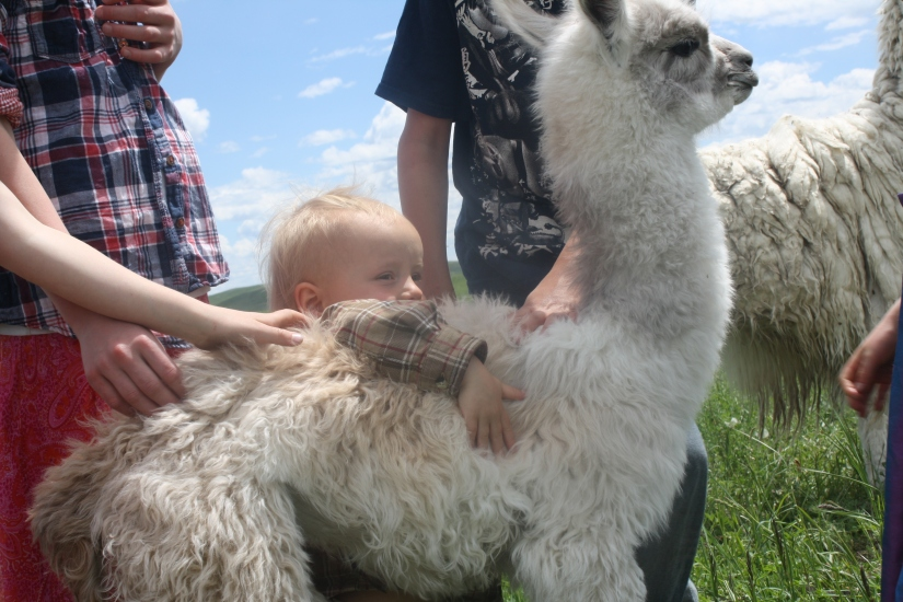 Llama Farmers at Aunty Bears Farm