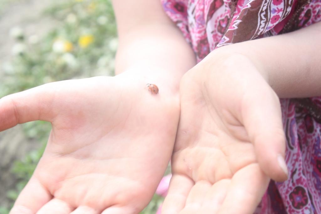 Lady Bugs at Aunty Bears Farm
